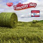 Kaytee Cubes de Foin Naturel Timothy Aliments Riches en Fibres pour Les Petits Animaux 454 g