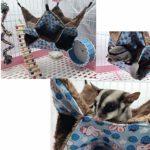 Oncpcare Hamac pour Petit Animal Domestique, lit Triple pour Rat, Cochon d'Inde, hamac