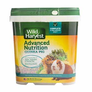 Wild Harvest Wh-83545 Advanced Nutrition Diet pour cochons d'Inde, 2Kilogram