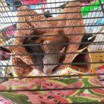 Hiver Petits Animaux Cage hamac Chaud lit superposé lit de Sucre Planeur