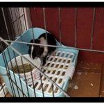 Md trade Boîte de Pot d'entraînement Parure de Lit Litière d'angle Carrée pour Animal Domestique Poêle pour Petit Animal/Cochon d'Inde/Lapin/Falesaur/furets (Bleu)