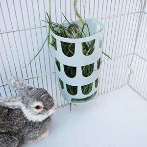 QDCITT Équerre en bois fixe pour lapin, chinchilla et cochon d'Inde, alimentation de produits pour animaux de compagnie en gros et au détail