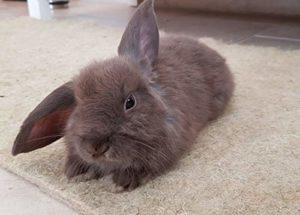 Tapis pour rongeurs 100% de chanvre, 40 x 25 cm, épaisseur 5 mm, paquet de 3 (3,92 EUR / pièce), adapté au revêtement de sol pour cage, pour lapins, hamsters, dégus, rats et autres rongeurs,…